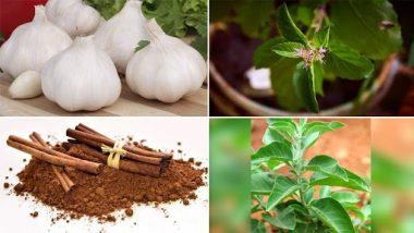 Winter Health Tips: हिवाळ्यात आजरांपासून दूर राहण्यासाठी करा 'या' औषधी वनस्पतींचा वापर