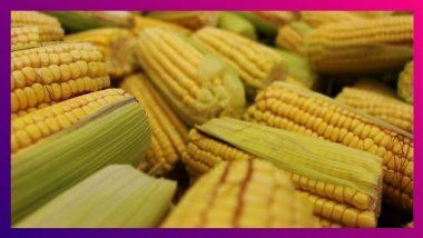 Corn Health Benefits: वजन कमी करण्यापासून, कर्करोगाचा धोका कमी करेपर्यंत 'हे' आहेत मका खाण्याचे आरोग्यदायी फायदे