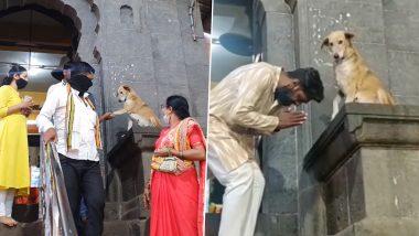 Dog Giving Blessings Viral Video: सिद्धिविनायक मंदिर सिद्धटेक च्या एक्झिट गेट भाविकांना 'आशिर्वाद' देणार्या कुत्र्याच्या अंदाजावर नेटकरी फिदा ( Watch Video)