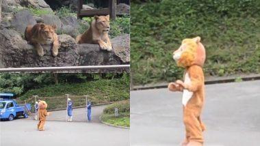Viral Video: जापान च्या प्राणिसंग्रहालयात ख-याखु-या वाघांसमोर खोटा वाघ बनून फिरताना दिसला एक व्यक्ती, पाहा पुढे काय झाले