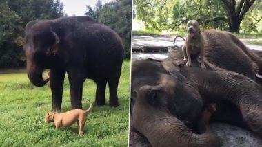 Viral Video: हत्ती आणि कुत्र्याची ही घट्ट मैत्री पाहून 'शोले' चित्रपटातील गाण्याची येईल आठवण, पाहा मजेशीर व्हिडिओ
