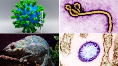 Coronavirus पेक्षाही 'हे' 7 रोग आहेत अधिक धोकादायक; वैज्ञानिकांकडून सतर्कतेचा इशारा, जाणून घ्या सविस्तर