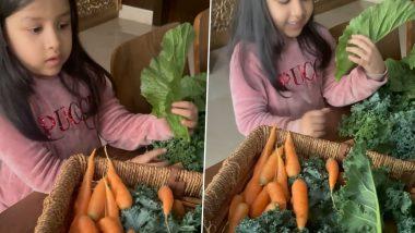 MS Dhoni याची मुलगी Ziva हिने आपल्या फार्महाऊसमध्ये लावले भाजी मार्केट, आई साक्षी सिंह धोनीने Cute व्हिडिओतून दाखवली झलक