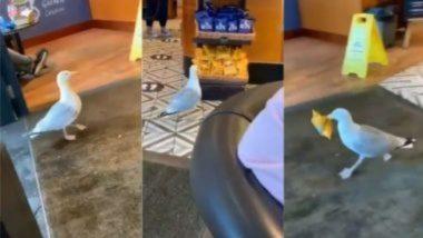 रेस्टॉरंटमध्ये छुप्या पद्धतीने घुसलेल्या पक्षाने चोरले चिप्सचे पाकिट, त्यानंतर झाला फरार; Watch Viral Video