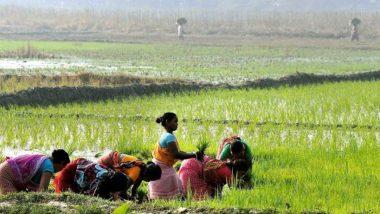 Union Budget 2021: अर्थमंत्री निर्मला सीतारमण यांची शेतकऱ्यांना मोठी भेट;16.5 लाख कोटींचे कृषी कर्ज देण्याची तरतूद