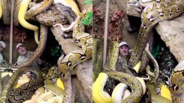 Man Surrounded By Snakes: अनेक धोकादायक सापांनी वेढलेल्या जागेत कॅमेऱ्यामध्ये बोलत राहिली व्यक्ती, अचानक... (See Viral Video)