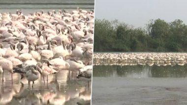 नवी मुंबई: नेरुळ च्या तलावात अवतरले मोठ्या संख्येने स्थलांतरीत पक्षी, पाहा मनमोहक दृश्य, See Pics