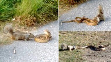 Viral Video: छोट्याशा खारूताईचा सापाने अडवला रस्ता, त्यानंतर दोघांमध्ये झालं जबरदस्त भांडण; पहा व्हिडिओ