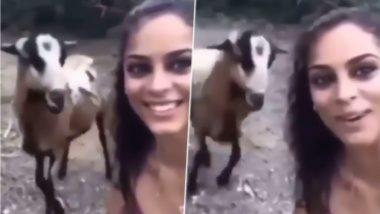 Goat Viral Video: बकरी सोबत सेल्फी घेणं महिलेला पडलं महागात; रागाच्या भरात शेळीने केला हल्ला, पहा व्हिडिओ