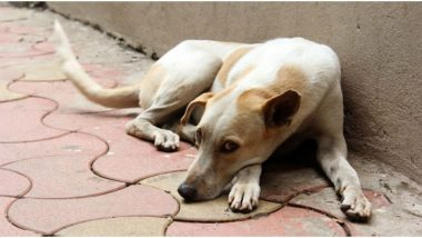 Maharashtra: ठाणे शहरात भटक्या कुत्र्याला जिवंत जाळलं; मानवजातीला काळीमा फासणारी घटना