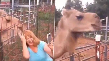 Viral Video: उंटासोबत सेल्फी घेत होती महिला, प्राण्याने केले असे काही तुम्हीही हसून व्हाल लोटपोट