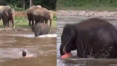 नदीत बुडणाऱ्या व्यक्तीसाठी हत्ती बनला देवदूत; 'असे' वाचवले प्राण (Watch Viral Video)