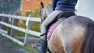 Nanded: दुचाकी, चारचाकी नव्हेतर थेट घोड्यावरून ऑफिसला येणार; नांदेड येथील एका कर्मचाऱ्याचे पत्र व्हायरल