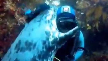 Dolphin Hug Viral Video: डॉल्फिन ने मारली पाणबुड्याला मिठी; पहा मानव आणि प्राण्यातील प्रेमाचा 'हा' अनोखा व्हिडिओ
