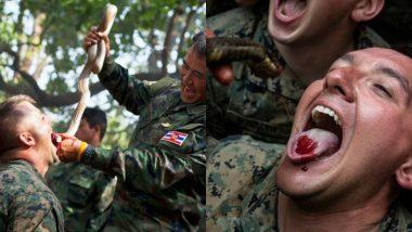 Cobra Gold Exercise: 'या' देशात प्रशिक्षणादरम्यान सैनिक खातात जिवंत विंचू-सरडे, पितात कोब्राचे रक्त; PETA ने दिली आंदोलनाची हाक