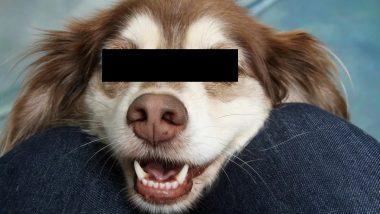 Dog Rape: भटक्या कुत्र्यांवर बलात्कार करणारा 'बाबुराव' पोलिसांच्या ताब्यात