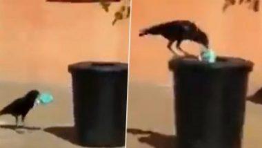 कावळ्याने आपल्या चोचीच्या साहाय्याने उचलला कचरा; पक्षाच्या या कामाने जिंकली नेटीझन्सची मनं (Watch Viral Video)