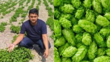 Bihar: बिहारमध्ये जगातील सर्वात महागड्या Hop-Shoots भाजीच्या शेतीचा दावा खोटा; चौकशीदरम्यान झाला धक्कादायक खुलासा