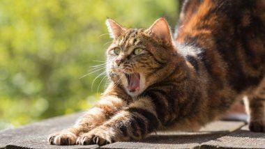 मालाड: पाळीव मांजरीची शेपटी कापल्याप्रकरणी एका अज्ञात व्यक्तीविरोधात गुन्हा दाखल