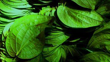 Betel LeafBenefit: अनेकगुणांनी भरपूर असते विडयाचे पान; जाणून घ्या फायदे