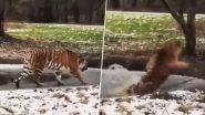 Tiger Viral Video: बर्फ जमलेल्या तलावावर चालताना घडले असे काही आणि चक्क वाघ ही घाबरला; पहा व्हिडिओ