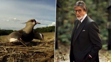 Amitabh Bachchan यांनी एका पक्ष्याचा सुंदर व्हिडिओ शेअर करुन चाहत्यांना दिल्या Mother's Day च्या शुभेच्छा, Watch Video