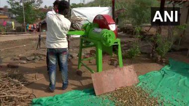 Giloy: ठाण्यातील अदिवासींना गुळवेल उत्पादनाची 1.5 कोटी रुपयांची ऑर्डर प्राप्त