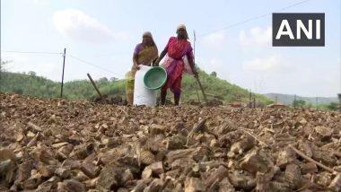 Giloy Trade-in Thane: ठाणे जिल्ह्यात गुळवेल व्यापार आदिवासींसाठी आर्थिक आधार