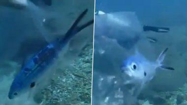 समुद्रामध्ये प्लॅस्टिकच्या पॅकेटमध्ये अडकून तडफडणार्या माशाला एका स्कुबा डायवरने दिले जीवनदान; पहा हा हृद्यस्पर्शी व्हिडीओ (Watch Viral Video)