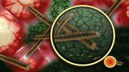 Mucormycosis: औरंगाबादमध्ये आढळले म्युकरमायकोसीस आजाराचे 200 हून अधिक रुग्ण