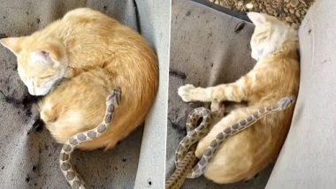 झोपलेली मांजर सापाला रश्शी समजून मारत होती मीठी, नंतर काय झाल ते तुम्हीच पाहा (Watch Video)