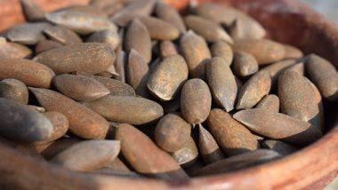 Benefits of Pine Nuts: रोग प्रतिकारशक्ती वाढविण्यासह 'चिलगोजा' आपल्याला बर्याच रोगांपासून वाचवते,जाणून घ्या फायदे