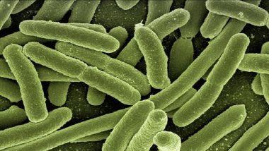 Mucormycosis Disease: म्युकरमायकोसीस आजाराबाबत सरकारची सावध पावले,  संभाव्य धोका टाळण्यासाठी हाफकिनला 1 लाख इंजेक्शन्सची ऑर्डर