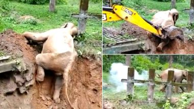 Karnataka:चिखलात अडकलेल्या हत्तीचा थोडक्यात बचावला जीव; वन अधिकाऱ्यांनी असे केले रेस्क्यू (Watch Viral Video)