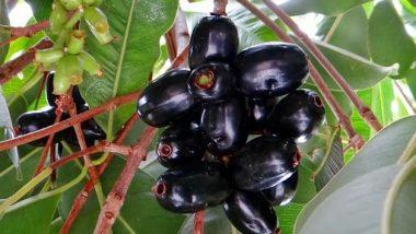 Jamun Seeds Benefits For Diabetes: मधुमेह असणाऱ्यांसाठी वरदान आहेतजांभळाच्या बिया; जाणून घ्या कसा कराल उपयोग
