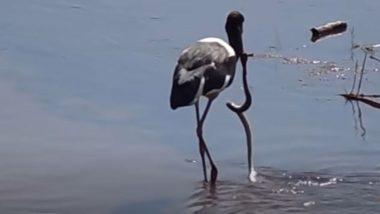 जेव्हा सारस पक्षी चोचीत तलावातील मासा समजून सापाला पकडतो तेव्हा काय होत ते तुम्हीच पाहा ( Watch Viral Video )