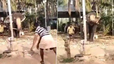 Viral Video: तुम्ही कधी क्रिकेट खेळणारा हत्ती बघितला का? व्हिडिओ पाहून सर्वांच्या भुवया उंचावतील