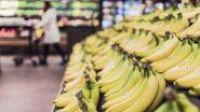 जळगाव ची GI Certified केळी दुबईला निर्यात; 2020-21 मध्ये भारताकडून 619 कोटी रुपयांच्या 1.91 लाख टन फळ निर्यात