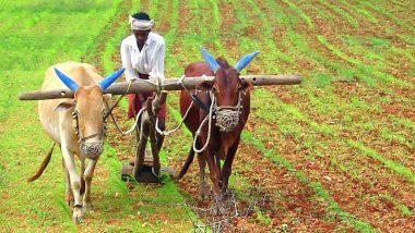 Bail Pola 2021: आज कर्नाटकी बेंदूर; यंदा महाराष्ट्रात बैलपोळा आणि बेंदूर कधी ? जाणून घ्या महत्व