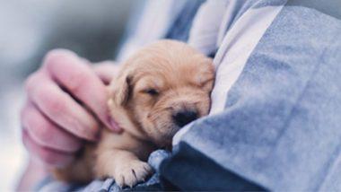 पाळीव कुत्र्याचा प्रवास सुखकर होण्यासाठी मालकाने बुक केली Air India ची Business Cabin