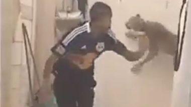 व्यक्तीवर हल्ला करण्यासाठी बिबट्याने घेतली उंच झेप, त्यानंतर झाले असे काही; पहा Viral Video