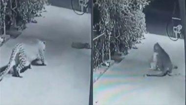 घराबाहेर झोपलेल्या कुत्र्याची बिबट्याने 'अशी' केली शिकार; घटना CCTV कॅमेऱ्यात कैद (Watch Video)