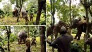 प्रशिक्षित हत्तीच्या मदतीने जंगली हत्तीला केले नियंत्रित; पहा Viral Video