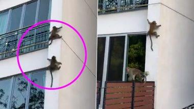 Monkey Viral Video: माकडांची उंच इमारतीवरुन घसरगुंडी, पहा व्हायरल व्हिडिओ