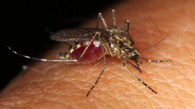 West Nile Virus in US: 7 राज्यांमध्ये पसरला धोकादायक असा 'वेस्ट नाईल व्हायरस'; अर्धांगवायूसह होऊ शकतो मृत्यू, जाणून घ्या सविस्तर