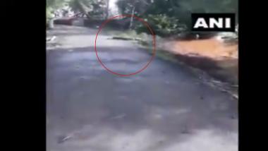 Maharashtra: सांगलीतील कृष्णा नदीच्या पाण्याची पातळी वाढल्याने रस्त्यांवर दिसली मगर (Watch Video)