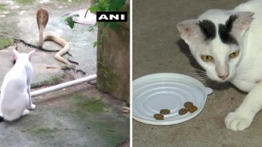 Odisha: घरात कोब्रा घुसु नये म्हणून मांजरीकडून सुरक्षा रक्षकाप्रमाणे अडवणूक (See Photo)
