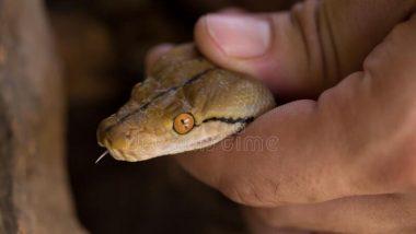रात्री बेडरुमध्ये झोपण्यासाठी गेलेल्या महिलेला बेड खाली दिसले चक्क 18 साप, पुढे काय घडले वाचा सविस्तर