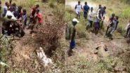 सांगली: रहिवासी परिसरात शिरलेल्या 12 फुटी मगरीला स्थानिकांनी 'असे' केले रेस्क्यू (Watch Video)