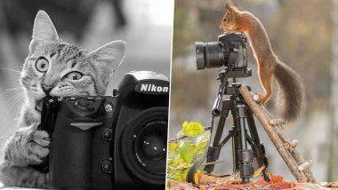 World Photography Day 2021: जागतिक छायाचित्रण दिनानिमित्त राज्य पर्यटन विभागाने जाहीर केली 'फोटोग्राफी स्पर्धा'; जाणून घ्या नियम व कुठे अपलोड कराल आपला फोटो